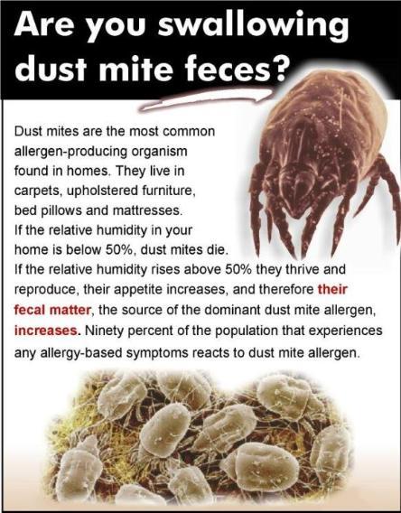 Dust-Mites1