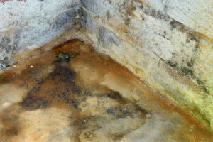 Picture of water and mold growth in the corner of a basement.